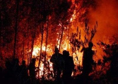 1628_Taller-incendios-forestales