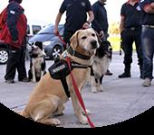 Brigada Nacional Canina K9