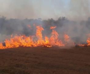 Incendios en las Islas del Delta